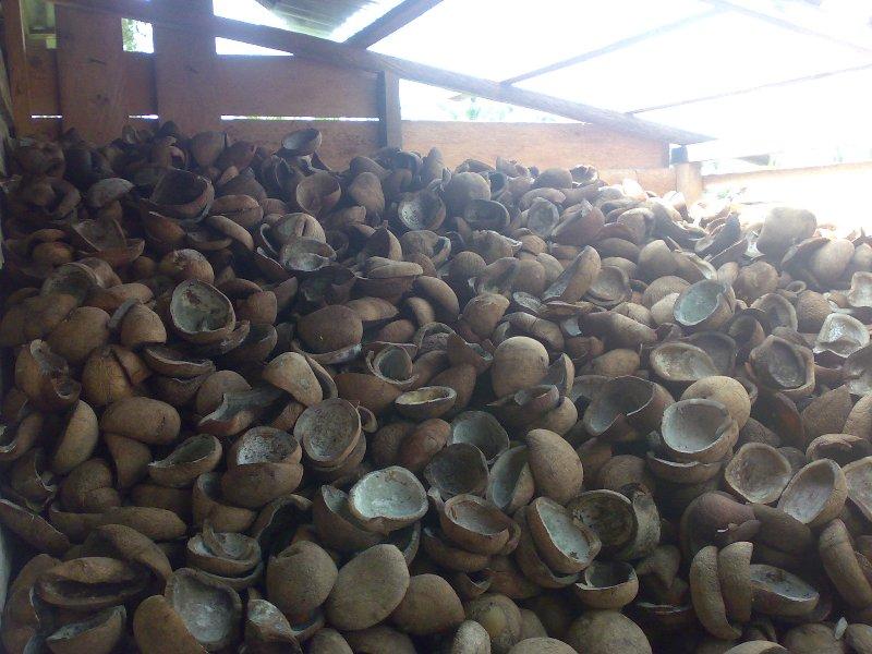 Buy Kopra coconuts