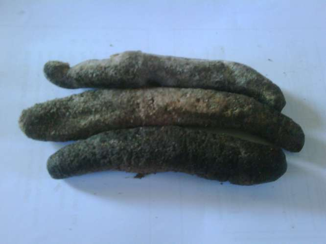 Buy Teripang Cera Abu Sea cucumbers