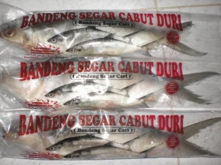 Buy Without thorns Milkfish