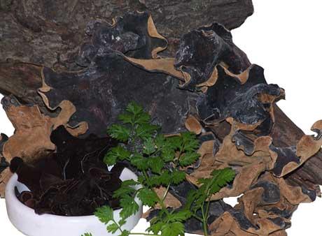 Buy Jamur kuping segar&kering dried mushrooms