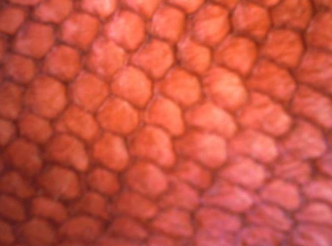 Buy Snapper Leather Sampler