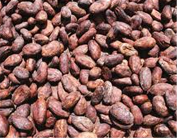 Buy Cocoa beans