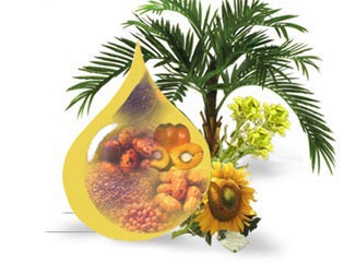 Buy Palm Olein Products