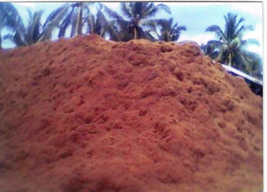 Buy Coco Peat