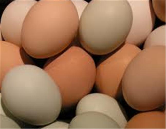 Buy Chicken Eggs