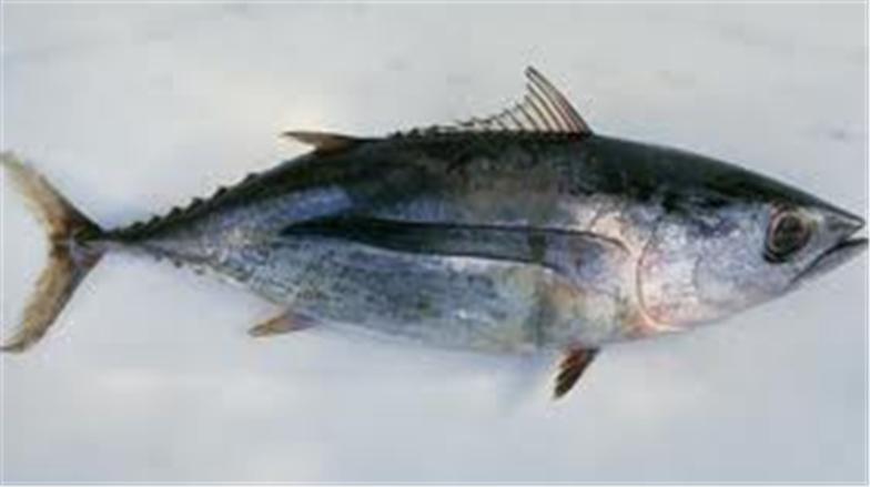 Buy Tuna