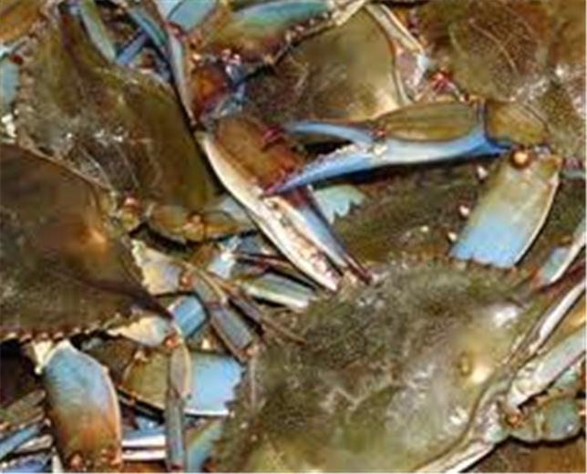 Buy Crabs