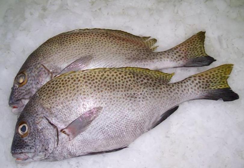 Buy Fish