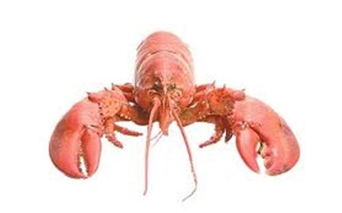 Buy Lobsters