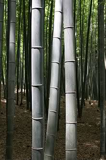 Buy Bamboo Wood Porducts