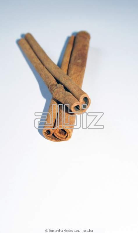 Buy Cinnamon Sticks