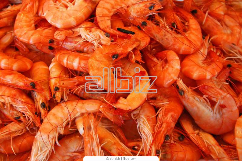 Buy Dried Shrimp Product