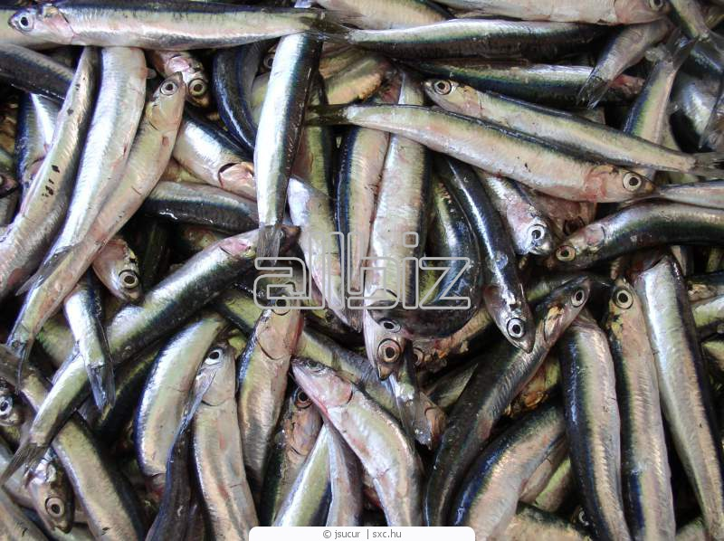 Buy Dried Anchovies