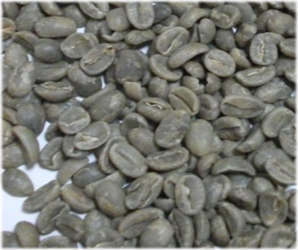 Buy Java Coffee Products