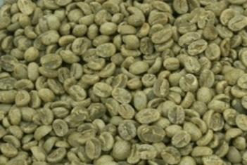 Buy Papua Arabica Coffee