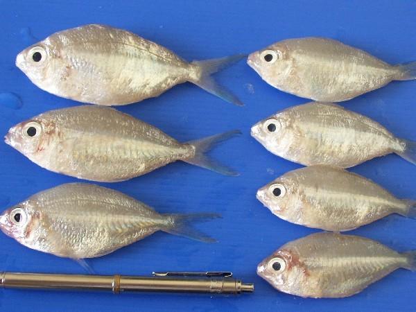 Buy Fresh fish Karapasan