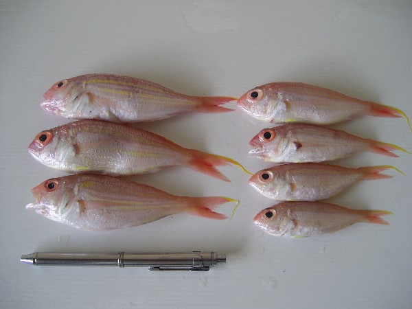 Buy Fresh fish Kuniran