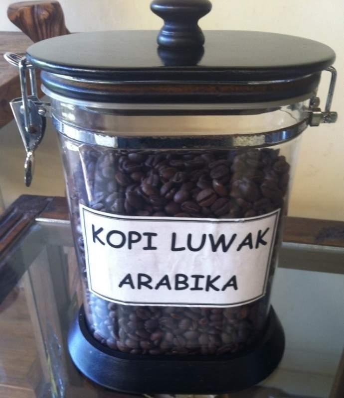 Buy Kopi Luwak