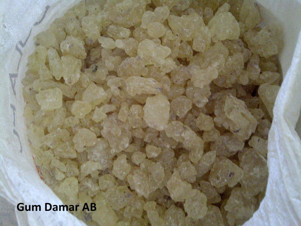 Buy Gum Damar / Shorea Javanica