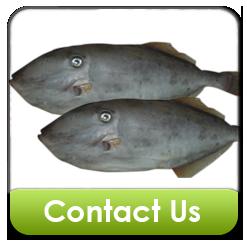 Buy Leather Jacket Fish