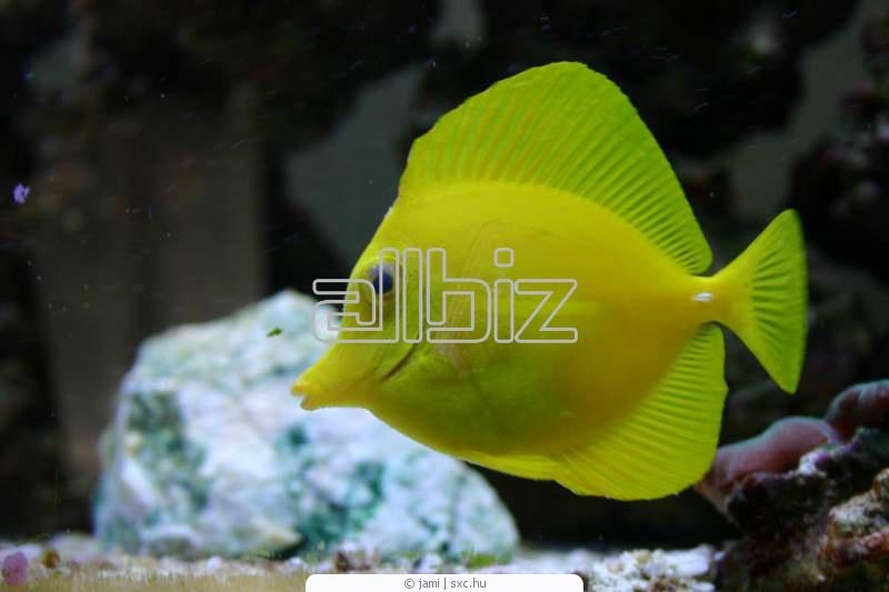 Buy Bannerfish Range