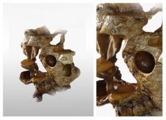 Furniture decorative, Teak root burr display