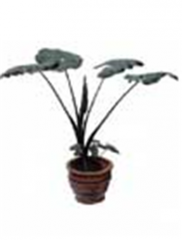 Alocasia dark leaves