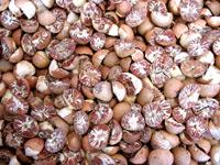 Betel Nut Products