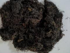 Dried Glacilaria Seaweed