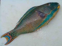 Parrot Fish Whole