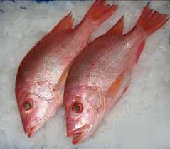 Red Snapper Whole