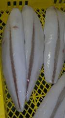 Oilfish fillet