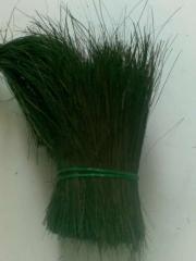 Ljuk Bahan Sikat, Brush