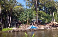 Kelapa tua, fresh mature coconut, coconuts