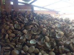 Kopra coconuts
