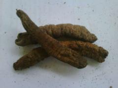 Teripang Cera Merah Sea cucumbers