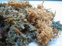 Dried Seaweed ( Rumput Laut)algae brown