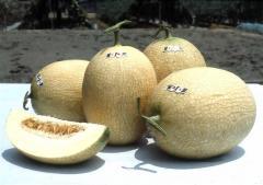 Melon Ten me