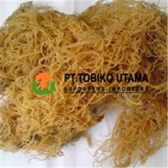 Euchema cottonii seaweed