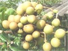 Seeds Plants Fruit