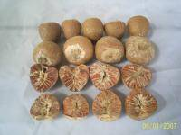 Betel Nuts Product