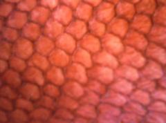 Snapper Leather Sampler
