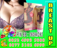 Cream breast up