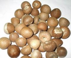 Betelnut Products