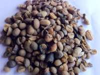 Green Arabica Coffee Bean Grade C