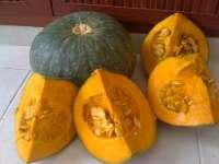Fresh Japanese Pumpkin