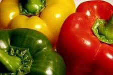 Hidroponik pepper