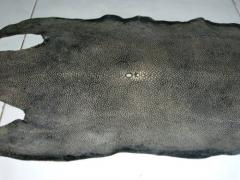 Stingray Leather