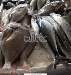 Any Kind Frozen Fish