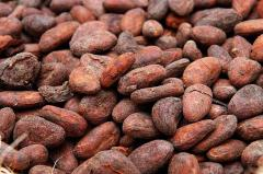 Cocoa Beans Product